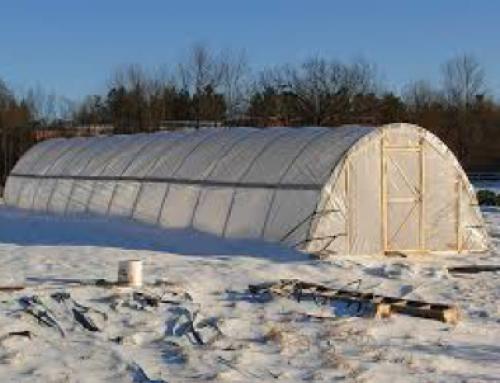 Čiščenje in priprava rastlinjaka za novo sezono